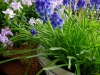 ベランダのお庭に春を呼び込む「一鉢二鉢」